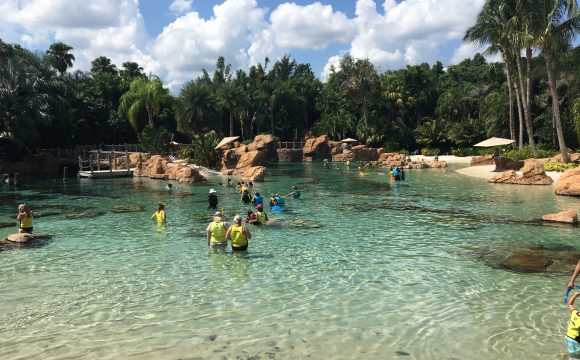 Discovery Cove – New 2020 Early Booking Discount