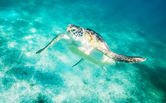 Take Inspiration from Blue Planet Live and Experience a Wildlife Cruise