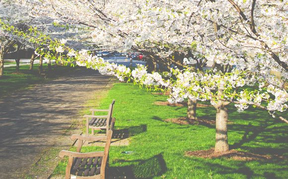 Spring into Armagh at the Apple Blossom Festival