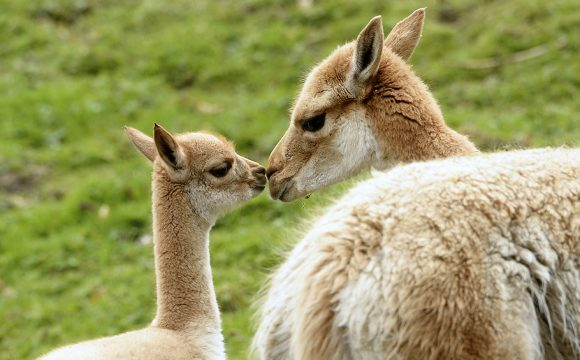 Baby Boom at Belfast Zoo this Easter