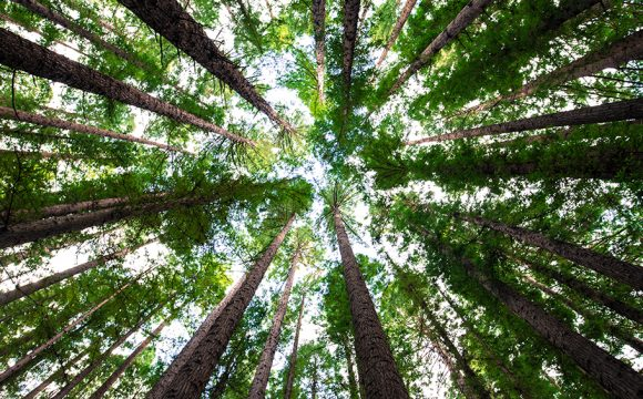 The Big Climate Fightback  – #Every tree Counts