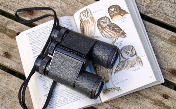 Beginner's Guide for Wildlife Lovers in Self-Isolation