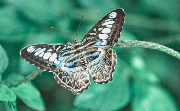 Discover a World of Marvellous Moths in your own Garden