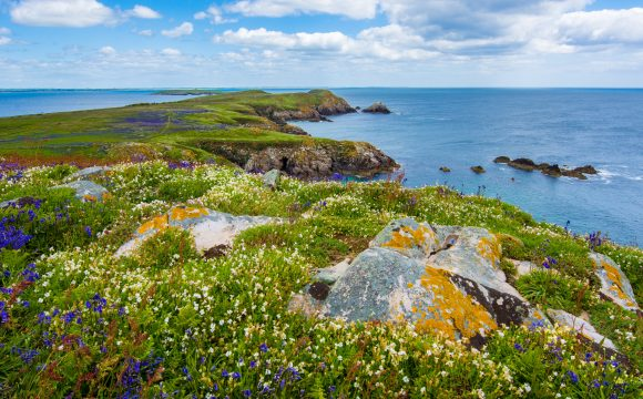 Celebrate Ireland's National Biodiversity Week 2020