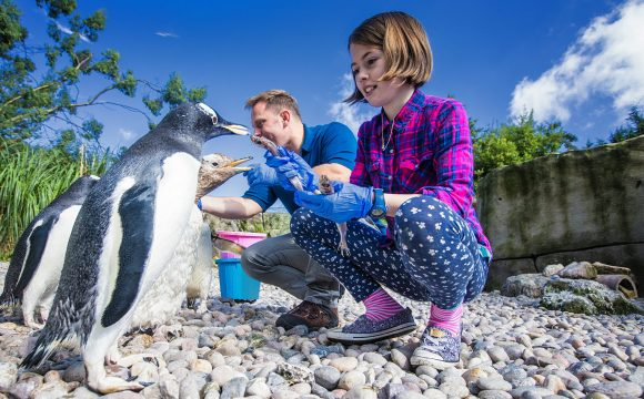 Belfast Zoo Reopens to the Public