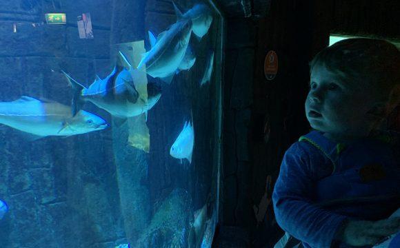 Under the Sea: Exploris, Portaferry