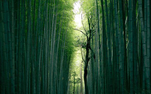 A Taste of Japan: Introducing Oita