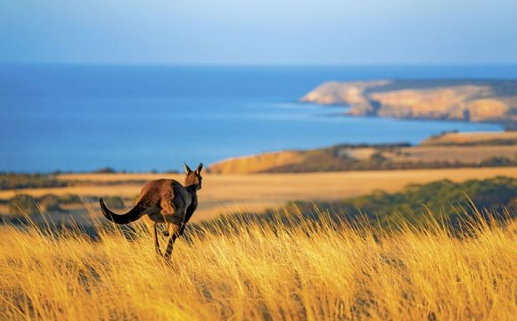 Discover 'Down Under' with Scenic's Australia and New Zealand Land Journey Collection